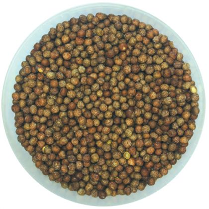 Kent Particles Maple Peas: click to enlarge